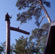 Альпіністи.Спил аварійних дерев