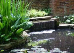 Біопрепарат Біо-плюс для шокової очищення ставків і акваріумів
