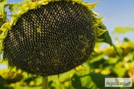 Buy sunflower seeds, plant protection products