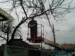 Дроблення гілок Київ.Спил дерева Київ.Видалення дерев Київ