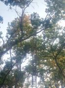 Професійна обрізка, вал, знесення дерев і пнів