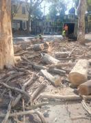 Професійна обрізка, валка, знесення дерев і пнів