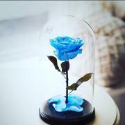 Прокинься, скоро свята! Порадуй свою кохану з допомогою троянди в