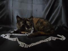 Шикарні кошенята екзотів на будь-який смак