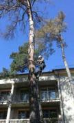 Спил дерев у Києві будь-якої складності