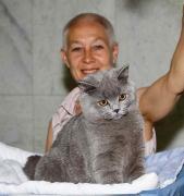Від розплідника - британський короткошерстий кошеня