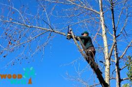 Вирубка чагарників. Корчування, видалення дерев